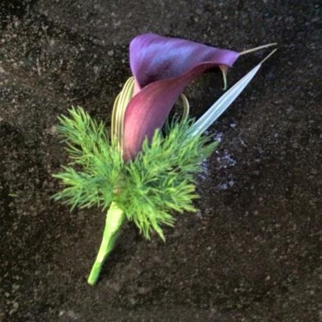 plum calla plum flowers