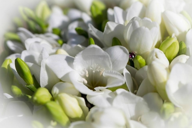 white scented flowers
