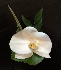 white orchid china grass