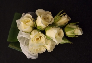 spray roses ladies