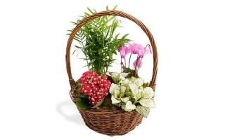 planted_seasonal_baskets
