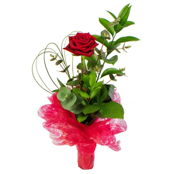 1 red rose in a glass vase