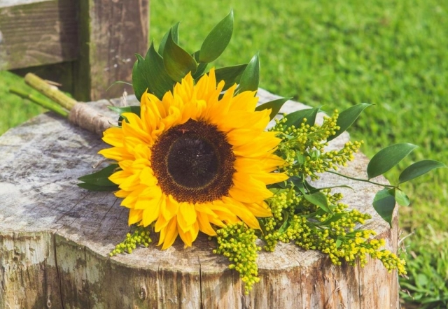 Bridesmaid sunflower solidaster & soft ruscuss